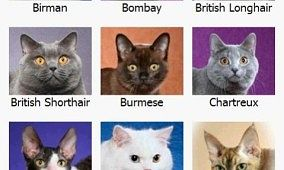 Cat Breed Reference: Overview Of Cat Breeds
