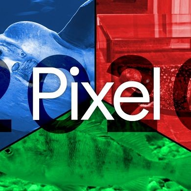 Google may be working on 2 mid-range Pixel phones for 2020: One with the 5G Snapdragon 765 and another with the 4G Snapdragon 730