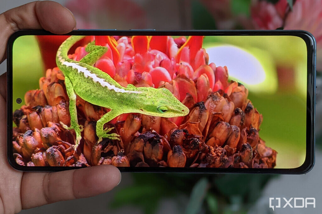 a lizard on red flowers on Xiaomi Mi 11X Pro display review