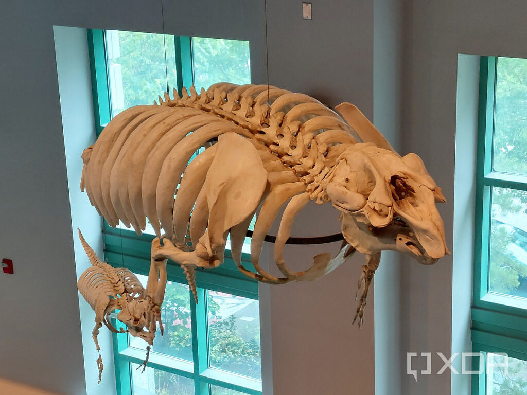 Photo of a skeleton in a museum