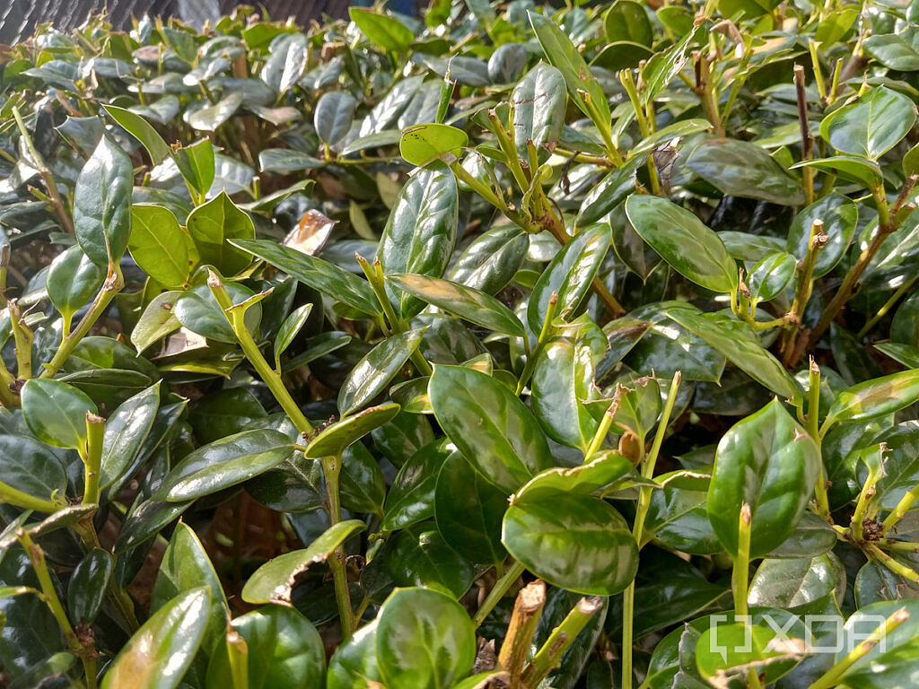 Photo of a bush with leaves